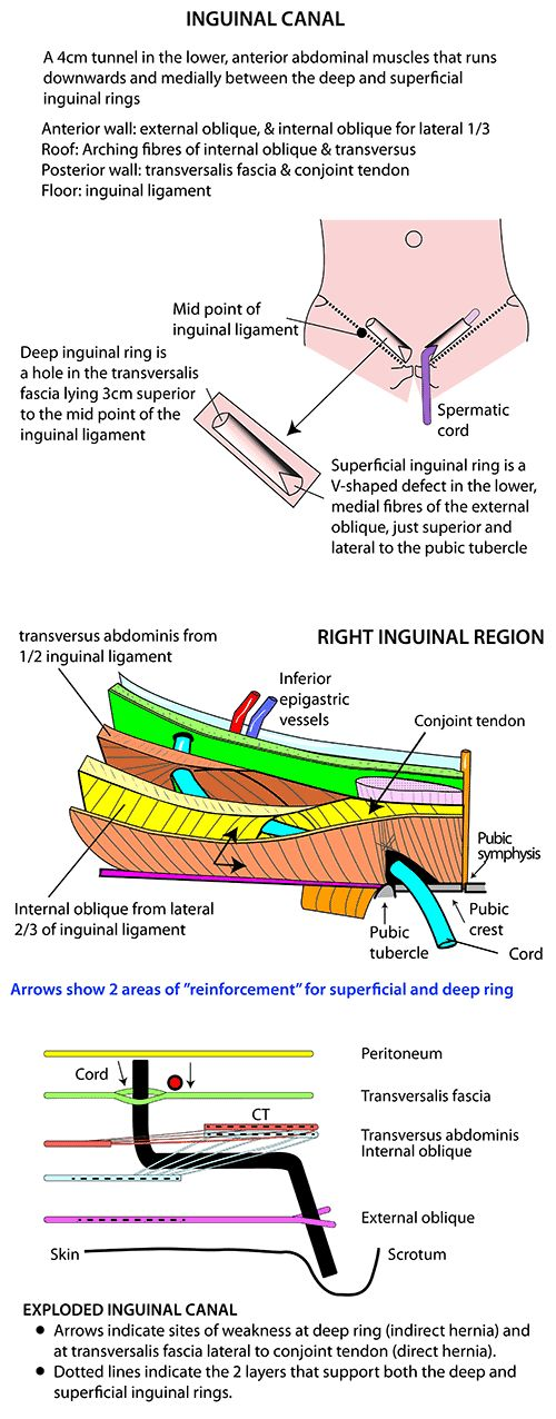 The 314 best Anatomy images on Pinterest | Human anatomy, Anatomy ...