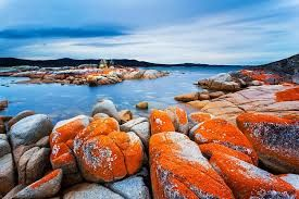 bay of fires - Google Search