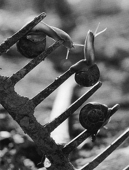 Jean Dieuzaide, l'Estocade, 1954. Learn Fine Art Photography - https://www.udemy.com/fine-art-photography/?couponCode=Pinterest22