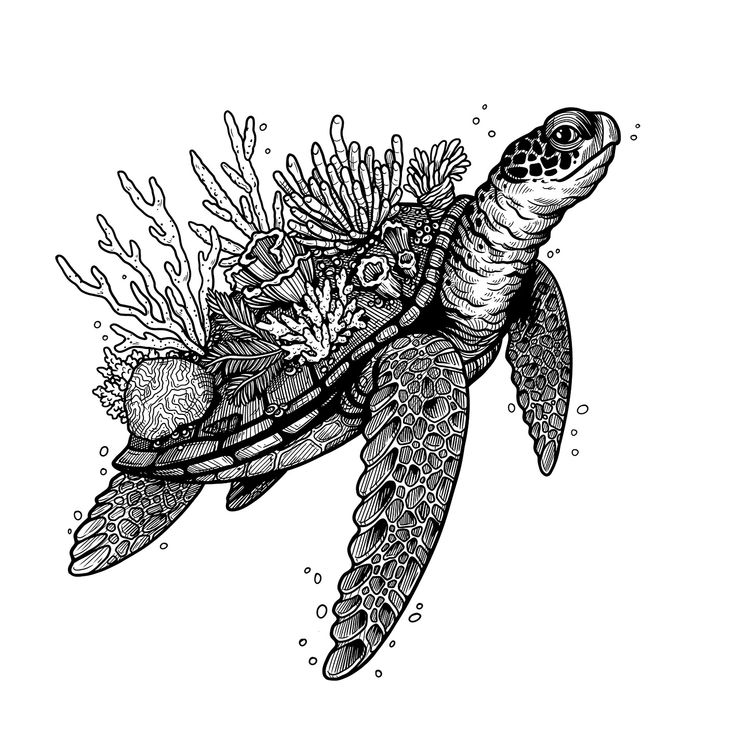This illustration of a turtle with coral on their shell presents a connection between an animal and their environment. It's available on t-shirts, mugs and as art prints at Design By Humans, perfect for ocean and animal lovers. Artwork by W.Kolinska.