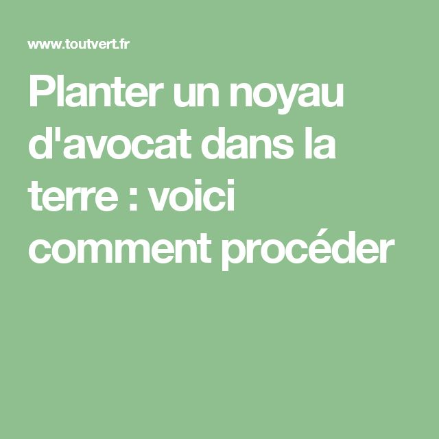 les 25 meilleures id es de la cat gorie planter noyau avocat sur pinterest pousser avocat. Black Bedroom Furniture Sets. Home Design Ideas
