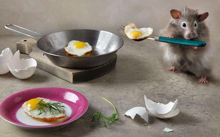 Прикольные картинки мышат с добрым утром