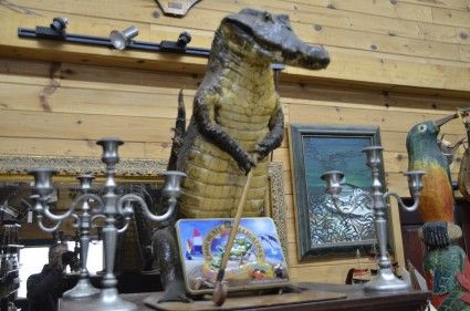 Antiquités & décorations - Croco empaillé et plus encore!