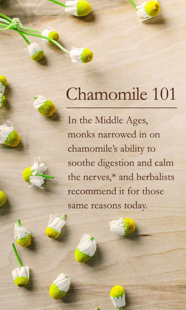 Like a humble daisy, the tiny chamomile flower doesn't claim much spotlight, but its impact on herbal medicine and folklore is undeniable and enduring.