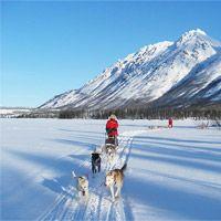 Dog sledding in Yukon Canada with Alayuk Adventures #vostok #expedition #down parka  http://www.alayuk.com/