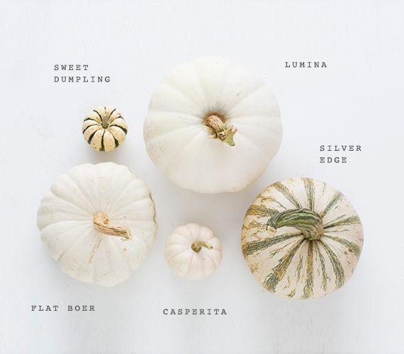 White heirloom pumpkin varieties | Photo by Scott Clark | See more on 100layercake.com/blog