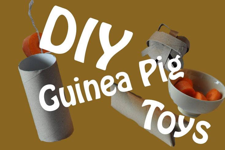 Here is just a few ideas of diy toys that you can make that are safe for your guinea pig please check out my guinea pig toys board for more safe toys for your piggy