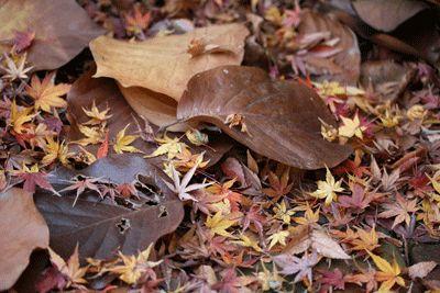 ☆.。.:*・花美を創造する毎日 in 二子玉川☆.。.:*・-落ち葉