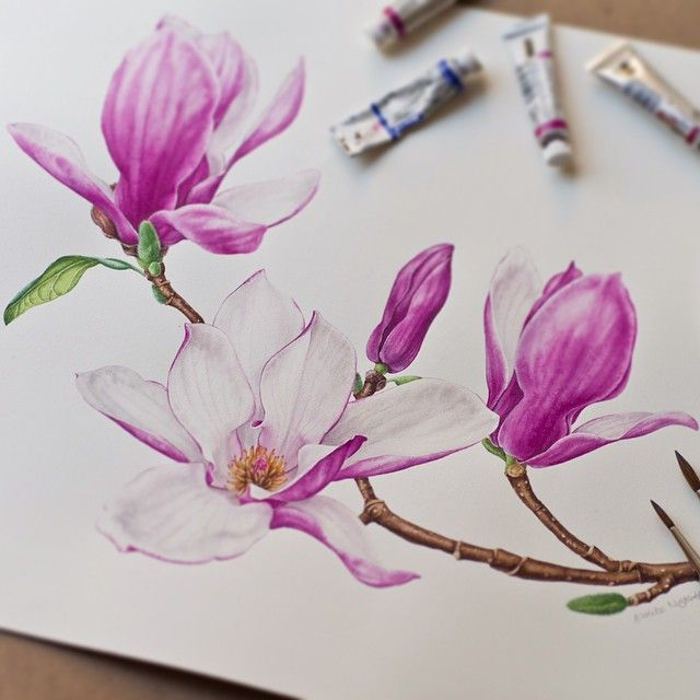 It's done! Have a lovely weekend, everyone! #magnolia #botanicalart #botanical…