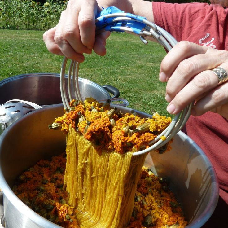 Marigolds for Dyeing - botanicalcolrs.com - Image courtesy of Tolt Yarn & Wool