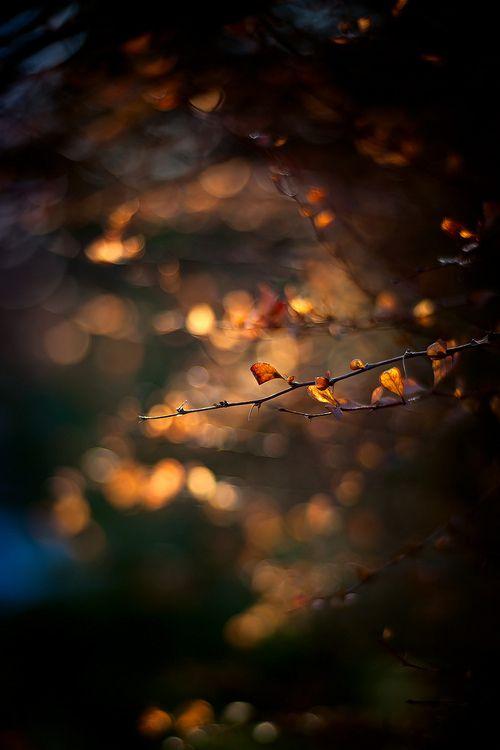 Light & Shade XXV (by Kelly Sereda)