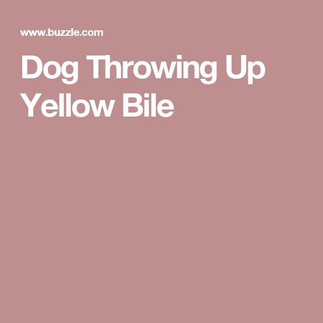 Dog Throwing Up Yellow Bile