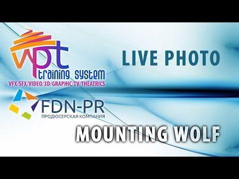 Mounting wolf - live photo - YouTube