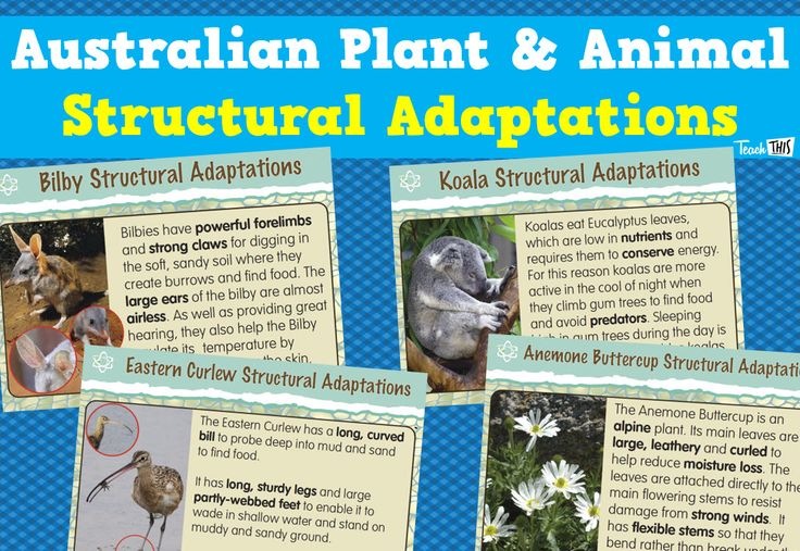 Australian Plant and Animal Structural Adaptations