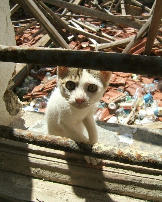 Cat in abandoned house on Skopelos island