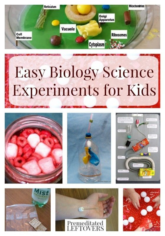 Easy Biology Experiments for Kids- Hands-on experiments are an exciting way to teach kids biology. These easy biology experiments will wow kids of all ages.