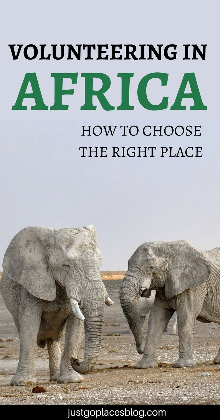 Volunteering in Africa is such a deep experimece, but how to choose the right place? Read on for tips and tricks on how to choose an ethical place.   Volunteering in Kenya   Volunteering in Itanzania   volunteering with animals   Volunteering abroad   Vol