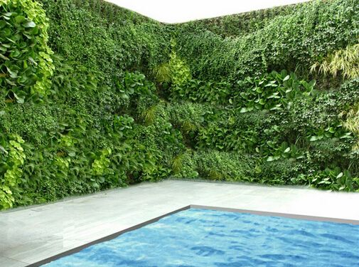 17 best images about best plants around swimming pools on for Garden near pool