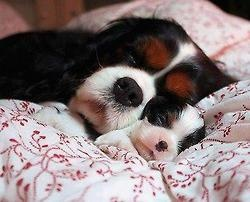 Oh. My. Goodness. This is just too cute!