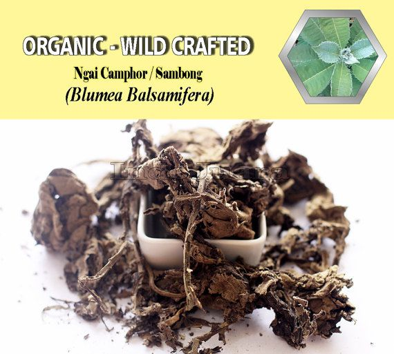 Diuretic, urinary tract infections, kidney and bladder stones, Lowers Blood Pressure, Antioxidants, menstrual cramps, Sore Throats, diarrhea, cramping, irritations, Liver Disease, Antibacterial, Anti-fungal, Fevers, Oral Pain Relief, Colds, Flues, Skin Wounds, etc. #Sambong #BlumeaBalsamifera #driedherbs #herbalremedies #sambongtea #tea