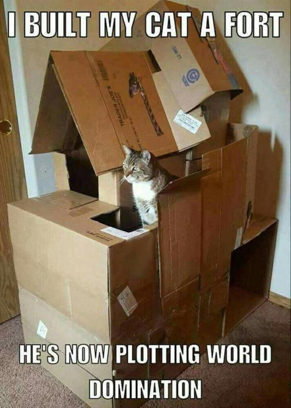 Lustige Katze Meme des DA