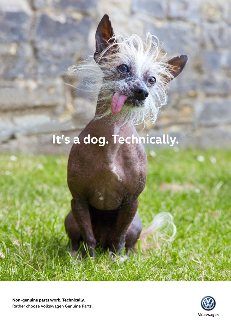 Volkswagen: Dog   Ads of the World™