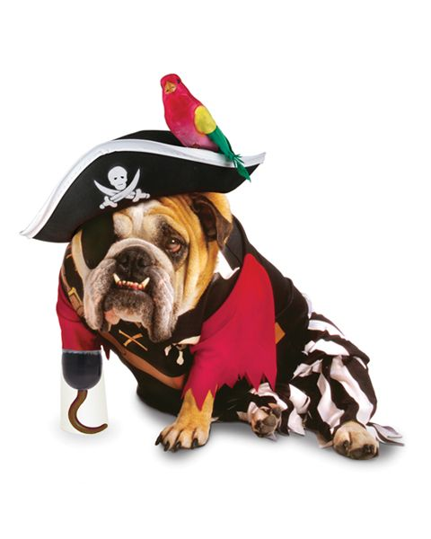 Pirate Dog Costumes : Pirate Costumes For Dogs, Big Dogs, Small Dogs