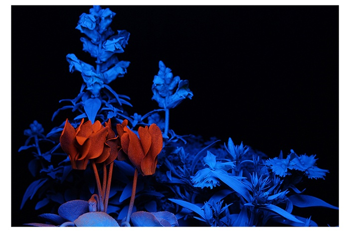 Flower Photograph Print - UV Light with spraypainted flowers. Great Home Decor Art. www.alysa.co.nz