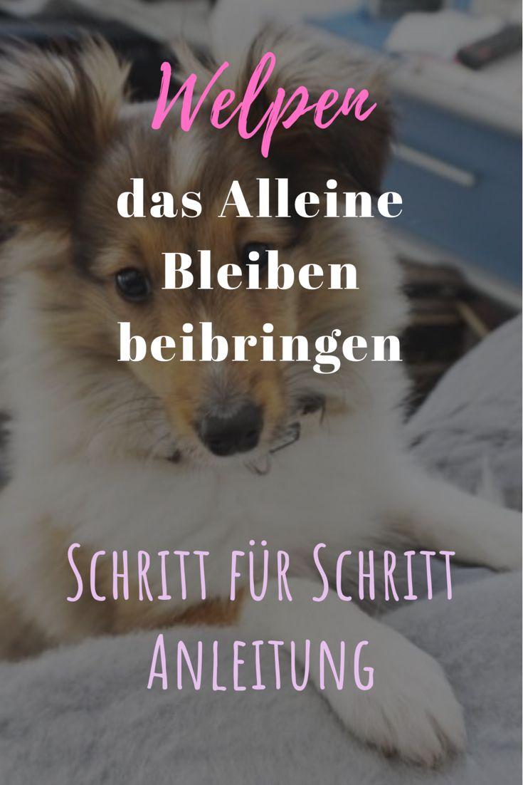 Wie Du Deinem Hund Das Alleine Sein Beibringen Kannst Schritt Fur Schritt Anleitung Welpen Hundewelpen Und Hunde