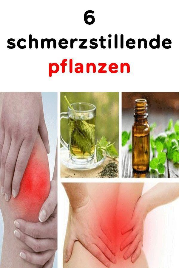6 Schmerzstillende Pflanzen Schmerz Stillen Pflanzen