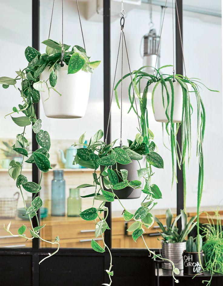 1000 idées sur le thème Plantes Suspendues sur Pinterest  Plantes ...