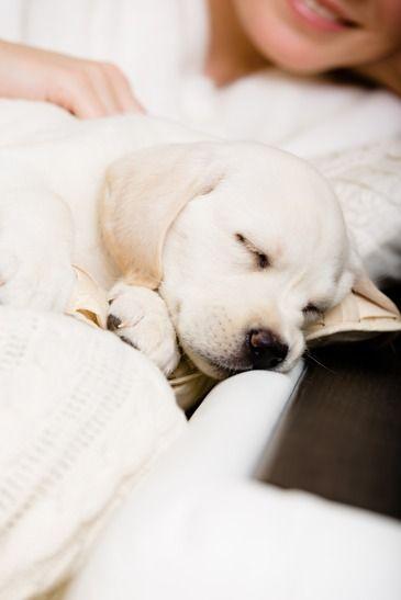 About Us | DoggySleepWorld.com
