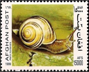 White-lipped Banded Snail (Helix hortensis)
