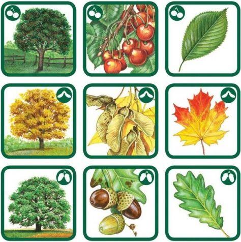 красивое картинки плодов деревьев с названиями летучая мышь стильный