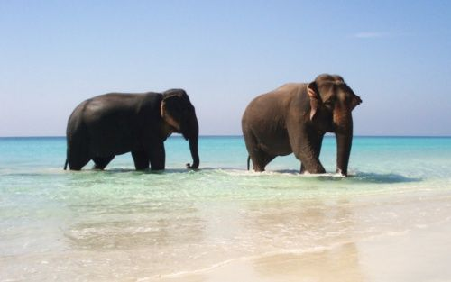 want to see some elephants!