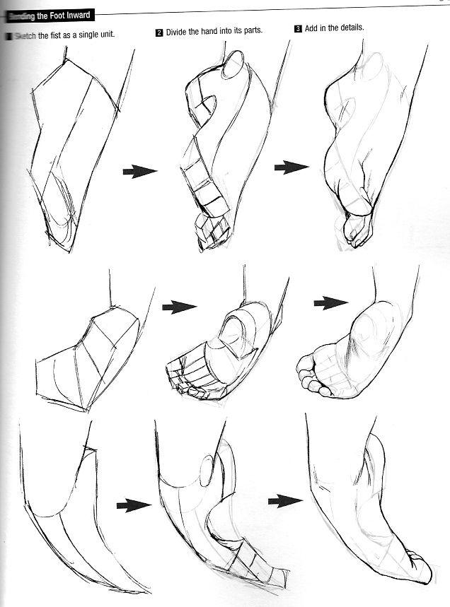 схема ступня ракурс