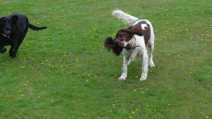 affectionately paws : just shaking it out . professional dog walker dog trainers puppy trainers in Hartley Wintney we offer the following services Dog Walking   1-2-1 Dog Walking 1-2-1 Dog Training 1-2-1 Puppy Training