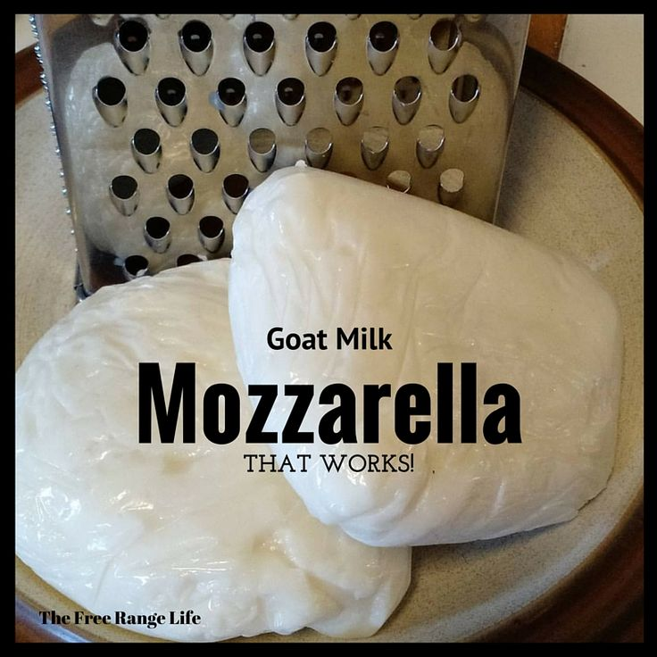 Try out this recipe for the perfect goat milk mozzarella cheese! No more crumbly, dry curds just lovely smooth mozzarella!