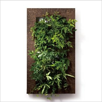 壁面緑化、室内緑化はPIANTA×STANZA(ピアンタスタンツァ)for ビジネス|店舗、オフィスのインテリアに植物を。[my gallery]