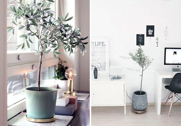 plants-creative-work-space-05