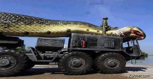 Giant Snake Killed in Egypt Red Sea