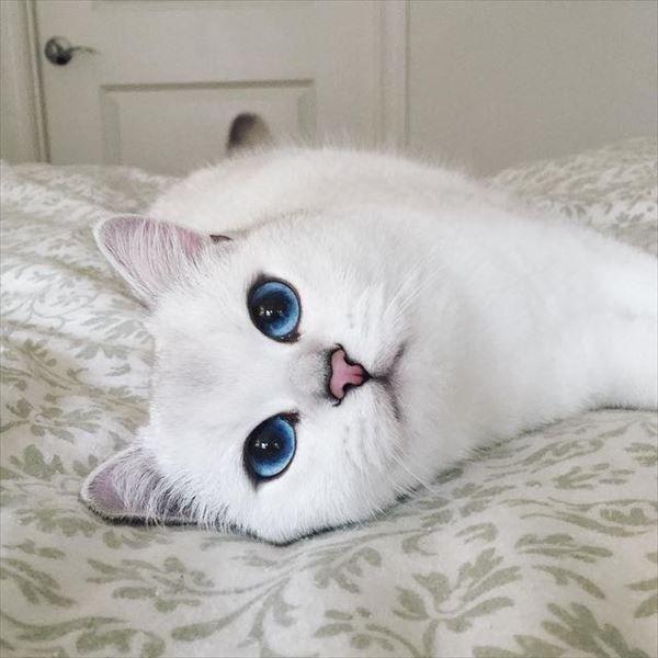 眼力が半端ない子猫が大人になった結果…とんでもなく美しい瞳の美猫に! 7枚   BUZZmag