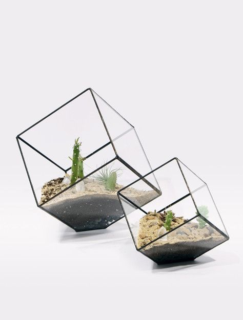 slightly off-kilter. perfect for me :)Glasses Container, Cubes Planters, Score, Plants, Gardens, Glasses Boxes, Products, Design, Cubes Terrariums