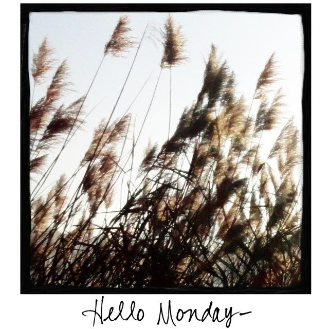 Hello Monday! Come visit A Warm Hello on Facebook to find photos to share!