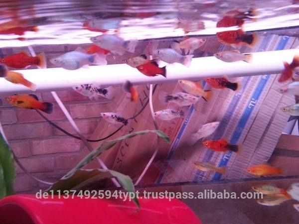 """Freshwater, Live Marine Fish, Corals, and Tropical Aquarium Fishes for Sale"""