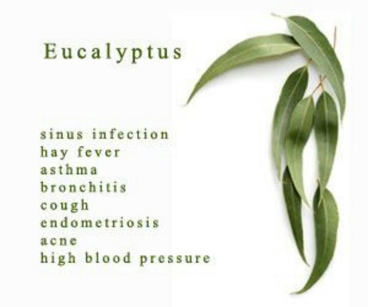 Eucalyptus Essential Oils Uses