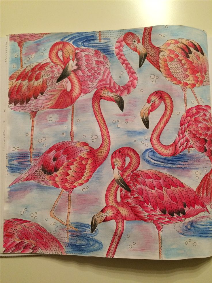 Flamingos. Wild Savannah-Millie Marotta