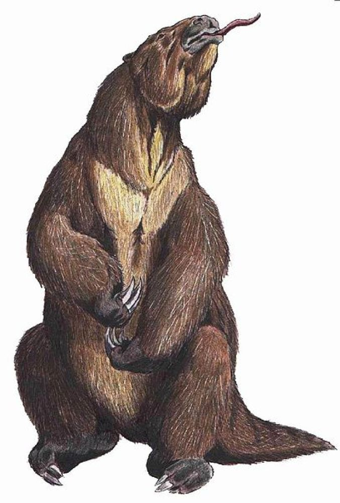 Megatherium Giant ground sloths of this genus were about the size of today's elephants. The megatherium only went extinct around 10,000 years ago (right around the time when humans started farming), and smaller relatives may have survived as late as the 16th century!