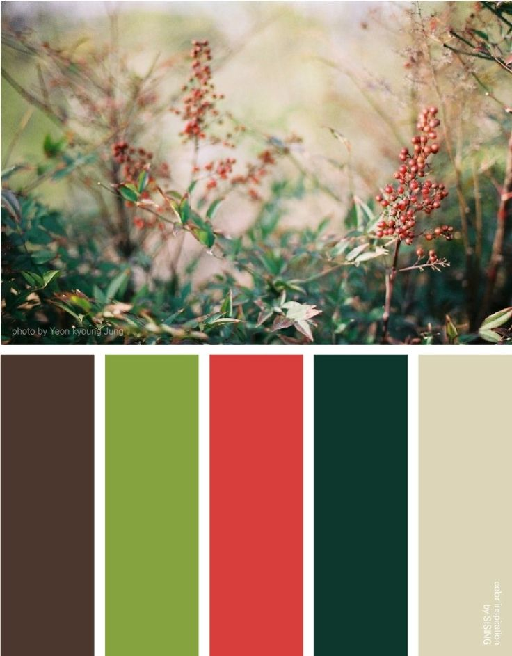 [color inspiration by SISING] wild, berry, brunch, red, green, bush, nature