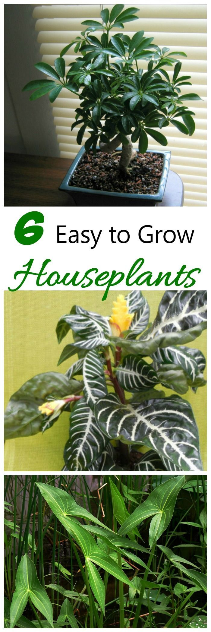 inside plants easy to grow - 700×2096